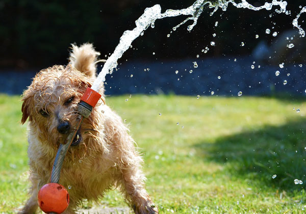 limpiar cesped artificial orina perro