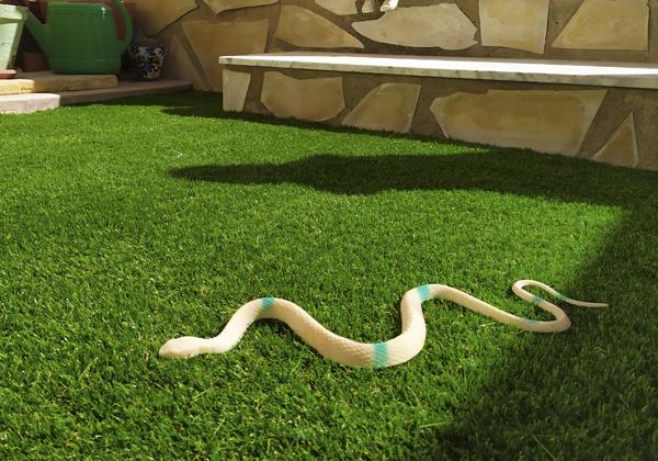 serpiente sobre cesped